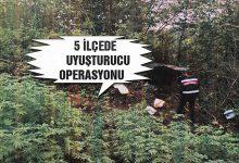 Jandarmadan 5 İlçede Uyuşturucu Operasyonu