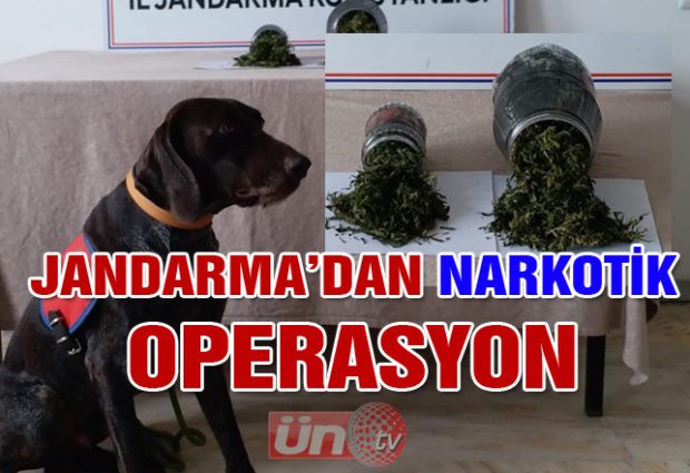 Jandarmadan Narkotik Operasyon!