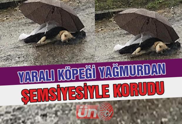 Yaralı Köpek Yağmur Altında Bekledi