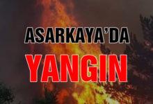 Asarkaya'da Yangın!